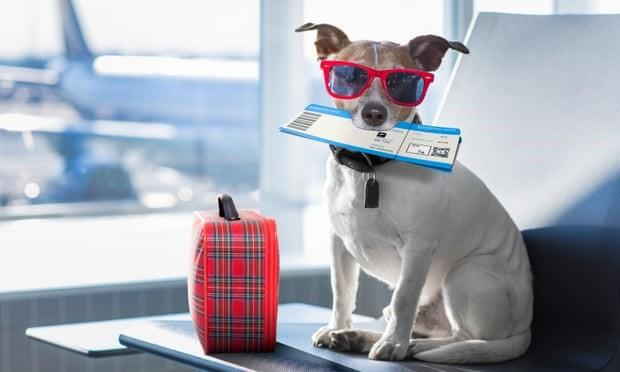 Pets on planes: Australians may soon be allowed animals in cabins but airlines are hesitant