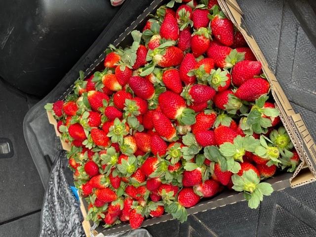 2021 Strawberries season just started!